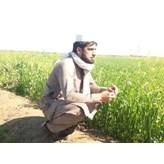 Ashraf2020